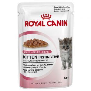 royal canin cibo umido gatti
