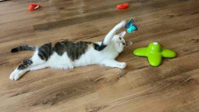 cibo e accessori per gatti